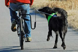Best Dog Bike Leash